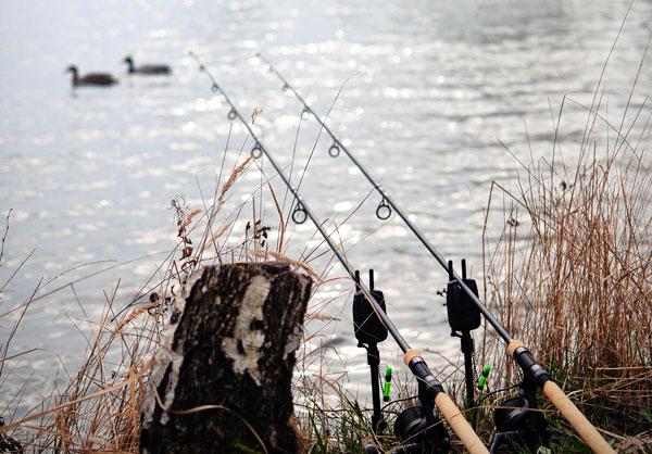 Mồi câu cá chép sông khác với ao hồ như thế nào?