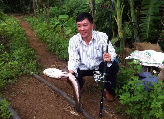 Kỹ thuật câu cá lóc như thế nào để hiệu quả câu được nhiều cá lớn