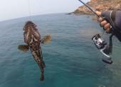 Mồi giả câu cá mú biển hiệu quả chia sẻ kinh nghiệm câu lure cá mú