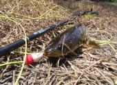 Hướng dẫn chọn cần câu lure cá lóc và mồi câu cá lóc phù hợp